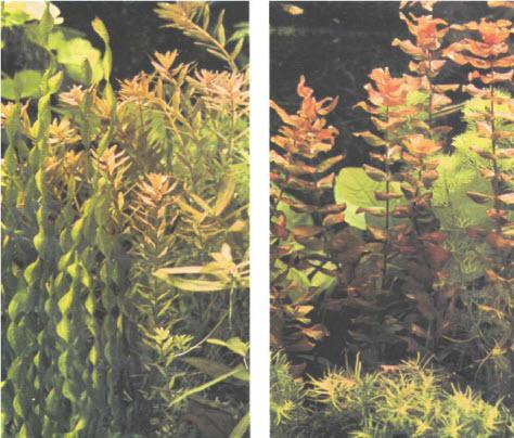foto Палитра растений
