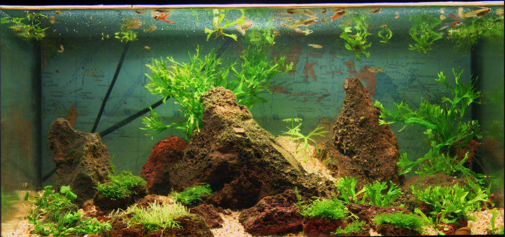 как очистить аквариум