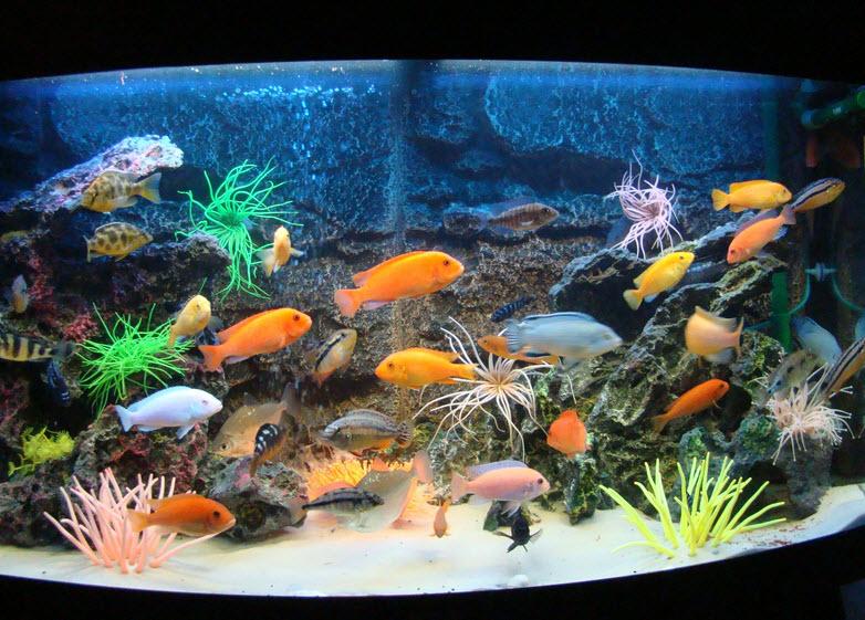 Охлаждение аквариума в жару