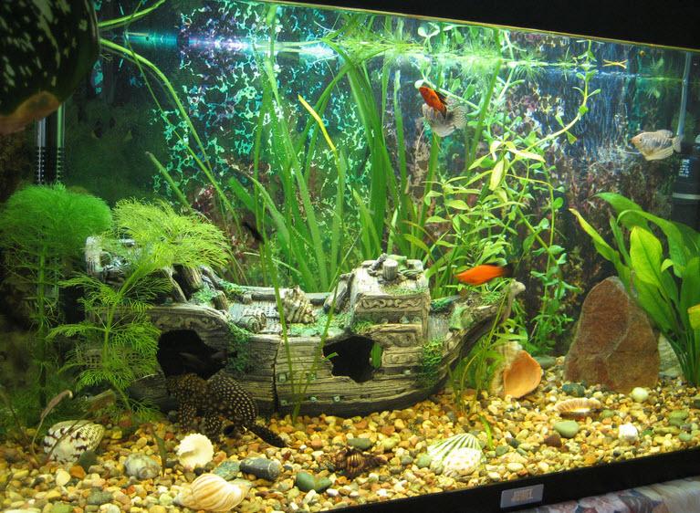 Выбираем стекло для будущего аквариума