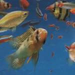 кормление аквариумных рыб