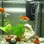 Типы аквариумных фильтров