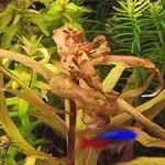 Признаки недостатка микроэлементов у аквариумных растений