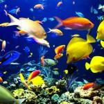 Приобретение аквариумных рыбок