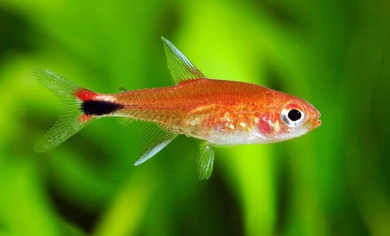 foto Аквариумные рыбки